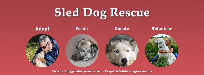 Working Dog Rescue Caleander