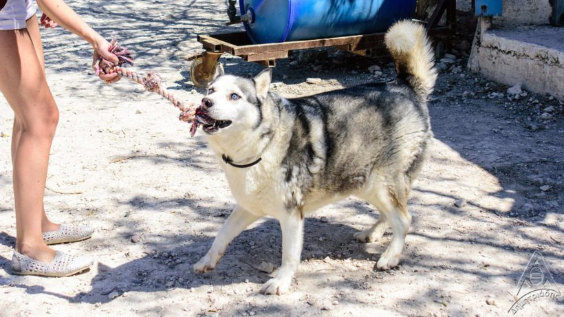 Fundraiser: Help Pushka with vet bills and food