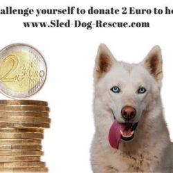 2 Euro challenge: could you donate 2 euros to help dogs?