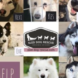 Fundraiser: Wings for 7 dogs