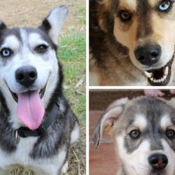 Save them all: dogs who need you!