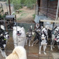 Help us build cage free sanctuary for dogs in Cyprus