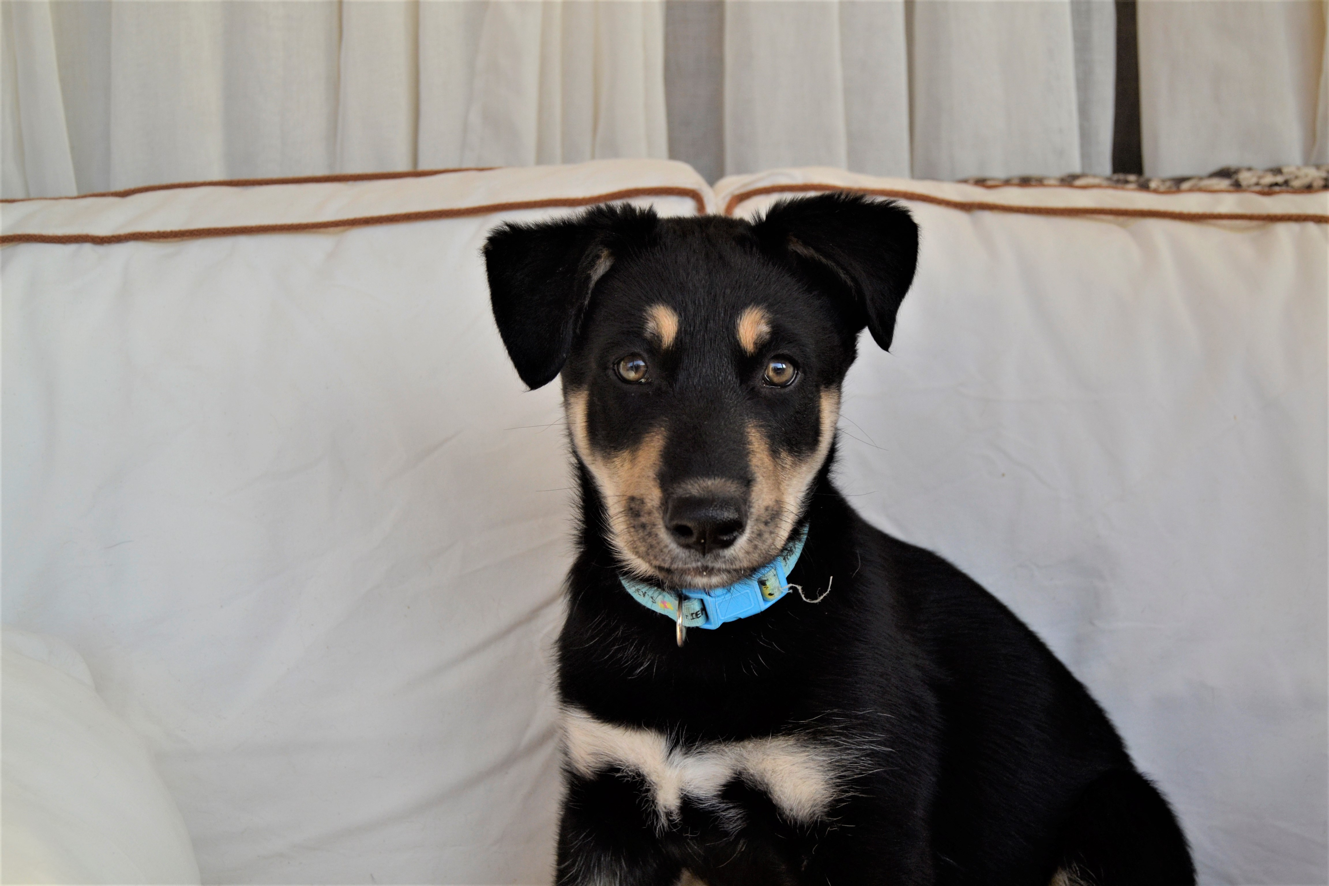 Ahnu - Sled Dogs Rescue