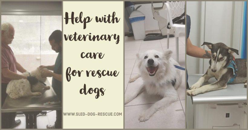 Urgent Veterinary Bills