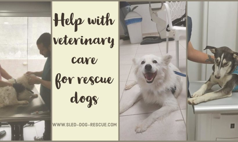Urgent Veterinary Bills