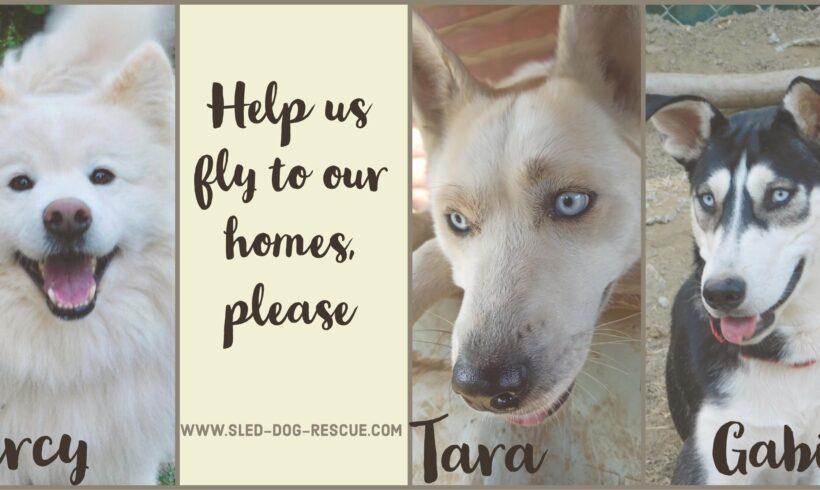 Life-saving flight! Help dogs that waited too long.