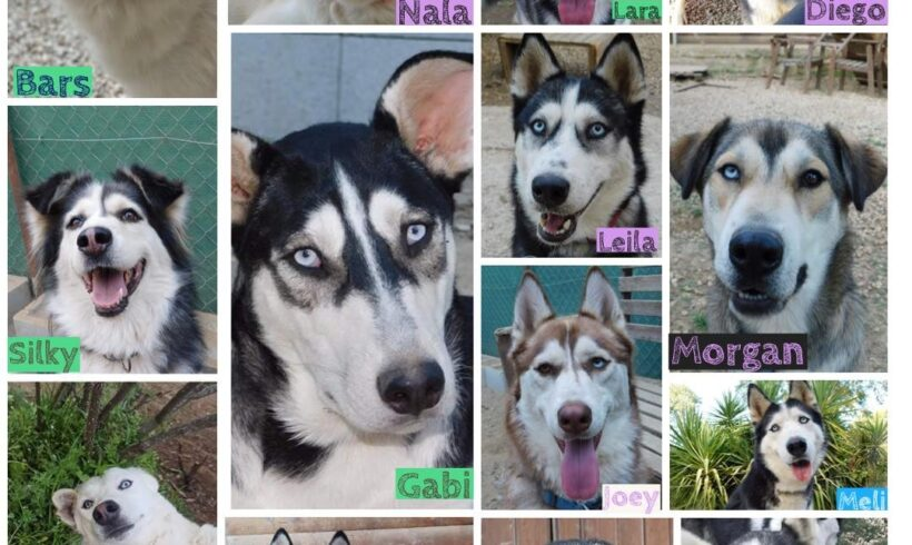 Help us to rehome our dogs